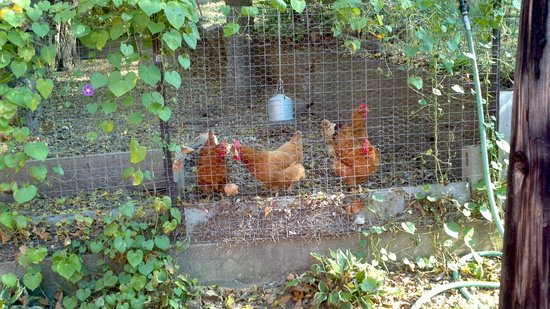 Dauphine Hotel Bed and Breakfast: Thank the hens!