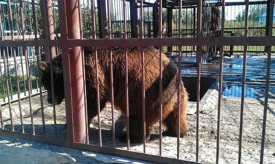 Starooskolsky Zoo