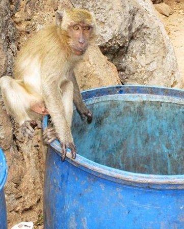 Wat Suwan Kuha (Cave Temple): monkeys outside the cave