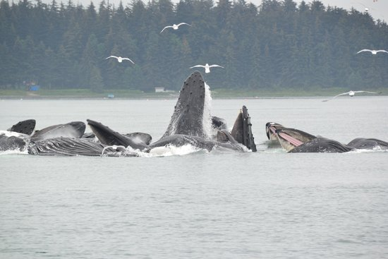 Best of Alaska Whale Watching Adventure and Salmon Bake