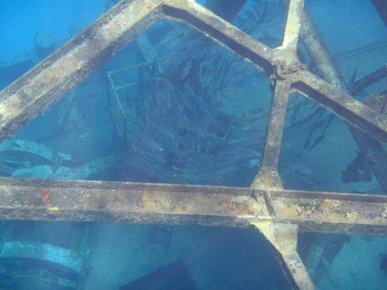 Kittiwake Shipwreck & Artificial Reef: lots of fish to see