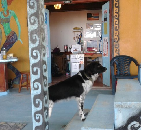 Yuma's House Belize: Buddy, one of two ever-vigilant house dogs.