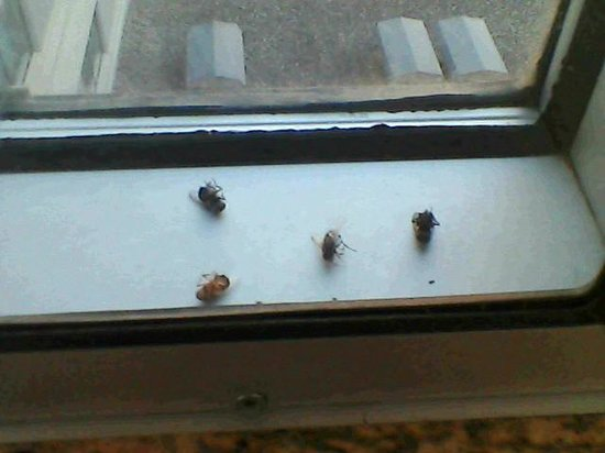 Hilton Winnipeg Airport Suites: bugs between the panes of glass