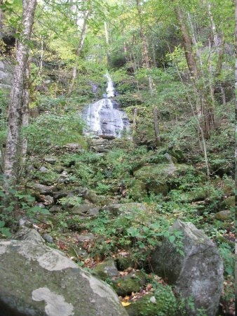 trees picture of great smoky mountains national park tennessee rh tripadvisor com