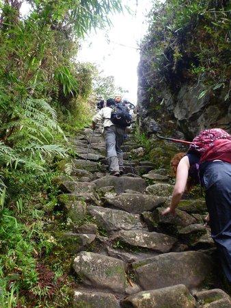 Camino Inca: The 'gringo killer' on day 4 leading to sun gate