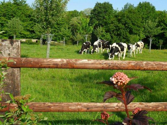 Chambres d'Hotes du Panorama : les voisines les vaches