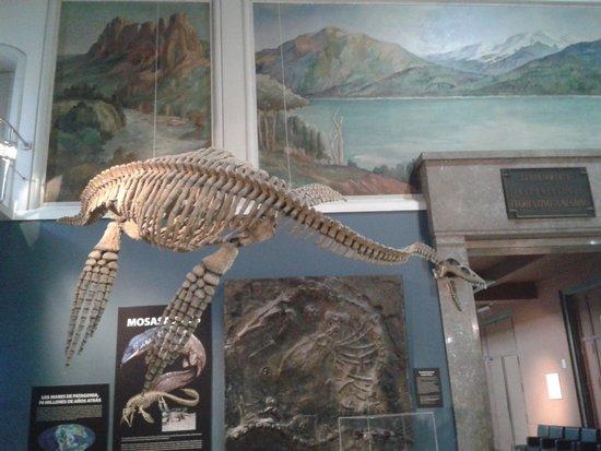 Residencia R1 : Museo Argentino de Ciencias Naturales