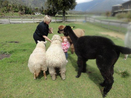 Glenfern Villas Franz Josef: Great animals for the little ones