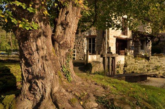 Le Moulin des Templiers : Le restaurant