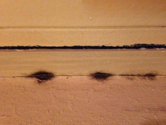 Trade Winds Central Inn: Black mold