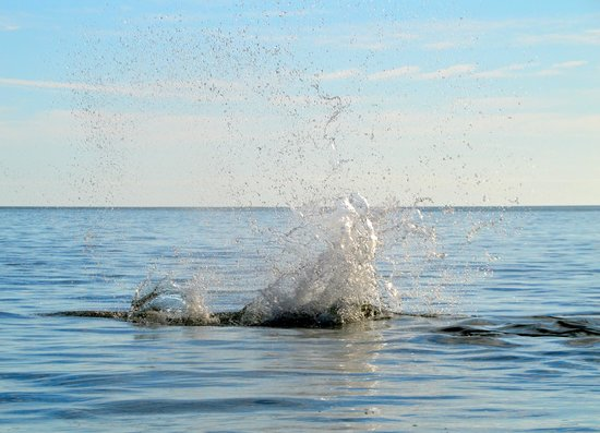 Backwater Adventure : Dolphin Splash....up close!