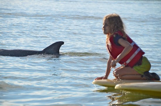 Backwater Adventure : The Guide's Grand Daughter....trying to pet a Dolphin