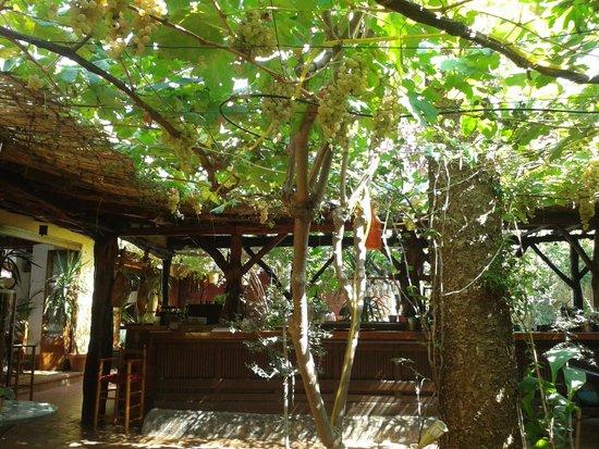 Restaurante Ca Na Ribes : Lovely Interior