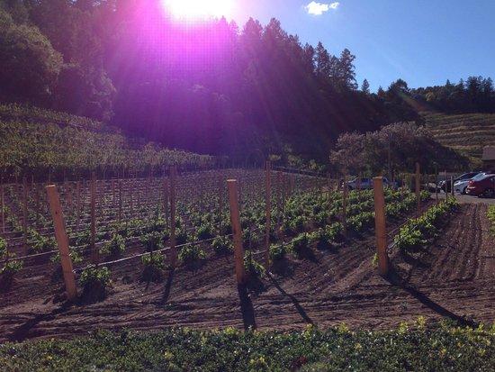 Pine Ridge Winery: Winery grounds
