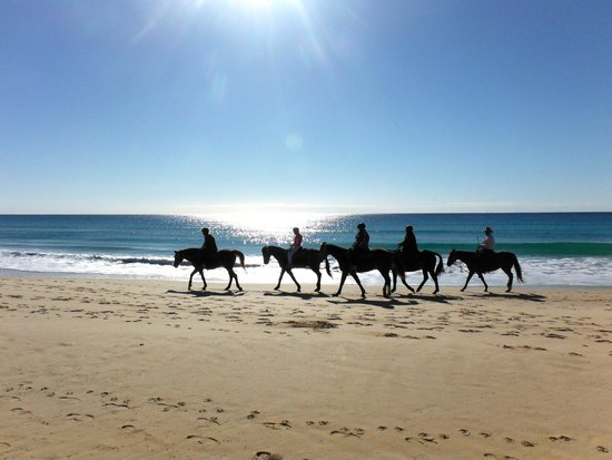 Image result for rainbow beach horse rides