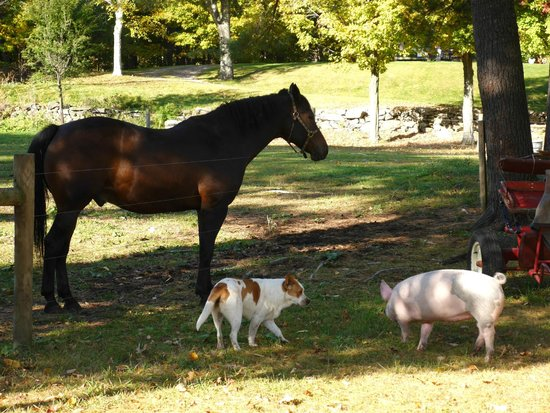 Trevin Farms: Prince protecting the pig