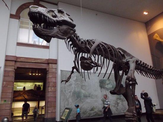 Senckenberg Natural History Museum (Naturmuseum Senckenberg) : 入ってすぐの展示ルームです