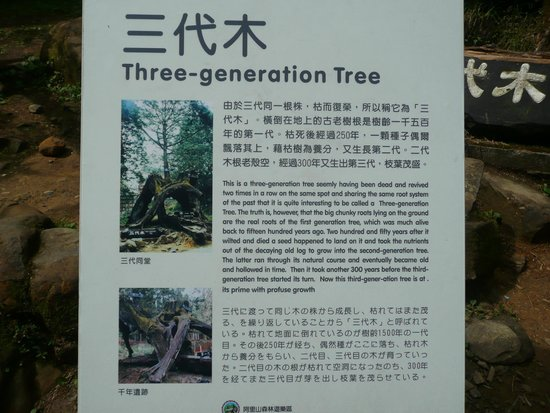 Three Generations Trees Info Picture Of Ali Mountain Alishan