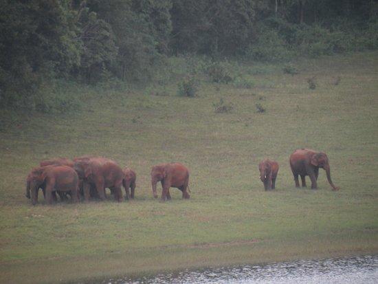 KTDC Lake Palace Thekkady: Herds