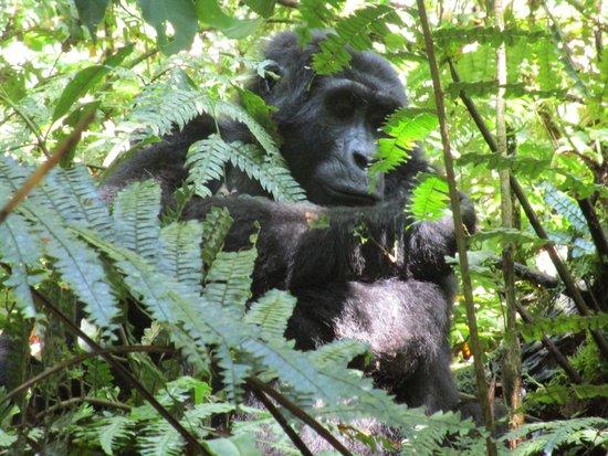African Pearl Safaris: Bwindi Impenetrable National Park