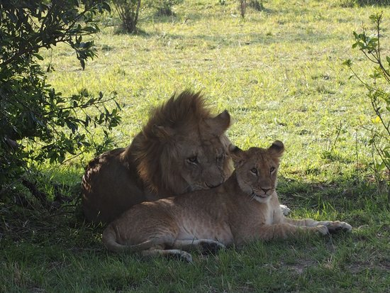 African Pearl Safaris: Kenya