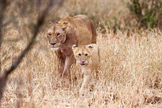 Kuro Tarangire, Nomad Tanzania: Wildlife galore