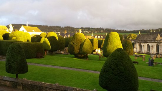 Falcon Inn: A selection of the 99 yew trees!