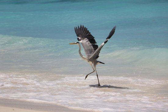 Silhouette Island, Seychelles: Fischreiher?!