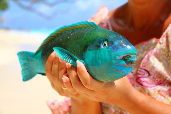 Silhouette Island, Seychelles: Fisch vom Fisherman