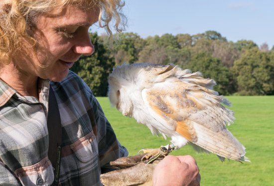 East Sussex Falconry: Gerard with Halo the Barn Owl