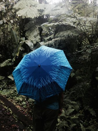 Monteverde Cloud Forest Lodge : Rainy season is a great time to visit
