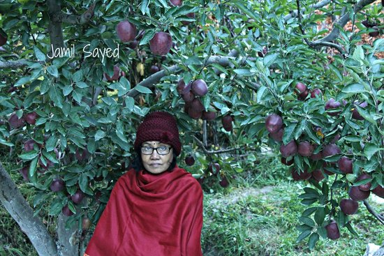 Apple Orchard Farm and Camping: My wife under the apple trees