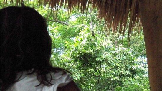 Hostel Clandestino: Mono aullador desde la cabaña