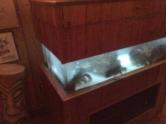 Shem Creek Bar & Grill: Choose your lobster......