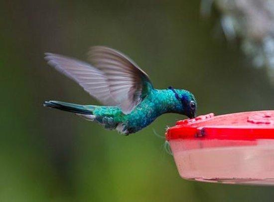 San Jorge Eco-Lodge & Botanical Reserve : Hummingbirds squabble over the feeders.
