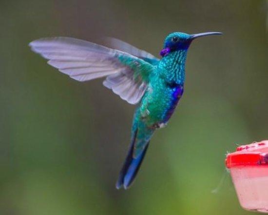 San Jorge Eco-Lodge & Botanical Reserve : Hummingbird again