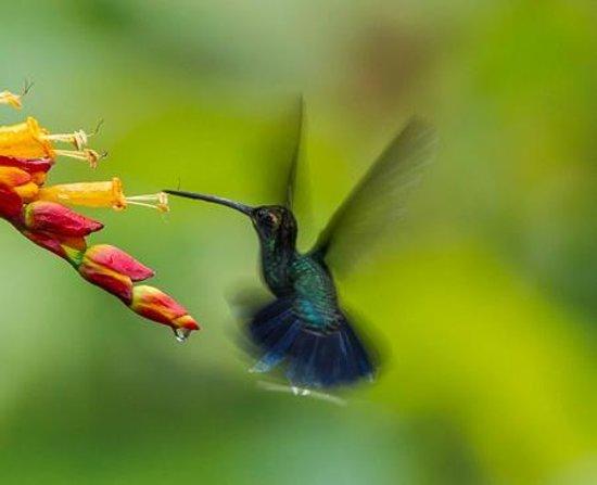 San Jorge de Milpe Eco-Lodge Orchid & Bird Reserve: Hummingbird