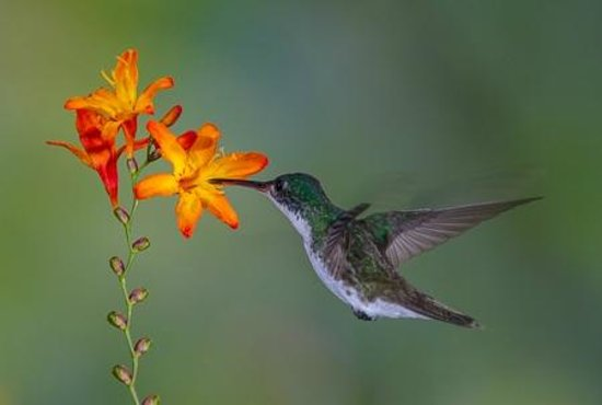 San Jorge de Tandayapa Hummingbird Sanctuary & Lodge : Hummingbird