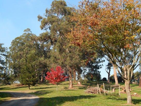 Korumburra Botanic Park