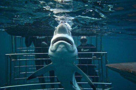 Shark Cage Diving KZN: Amazing shot!