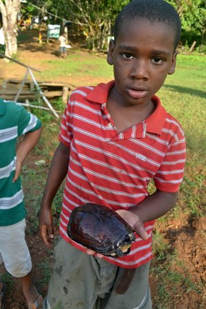 Laguna Big Pond: Niño nativo con tortuga