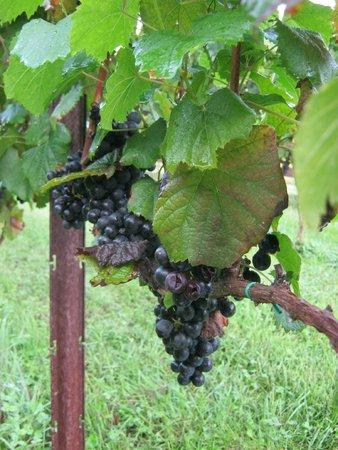 Stonewall Creek Vineyards: merlot