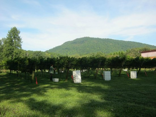 Stonewall Creek Vineyards: Glassy Mountain across from the vineyards