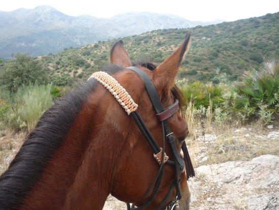 Ride Andalucia: Luca enjoying the scenery