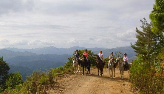 Ride Andalucia: Beautiful horses