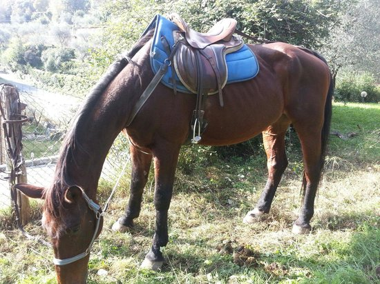 Agriturismo Scuderia Castello: Uno dei cavalli della scuderia