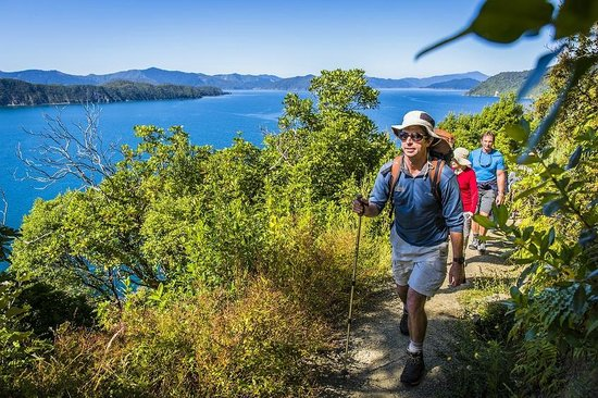 Marlborough Sounds Adventure Company - Day Tours : Stunning views on Queen Charlotte Track