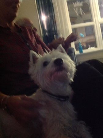 Kingsway Hotel : Lovely family dog to..soo friendly��
