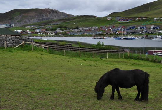 Scalloway Castle: Who doesn't want to see a pony on Shetland?