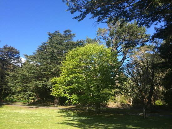 Harcourts Holiday Park: Stunning trees and parkland adjacent to the cabins